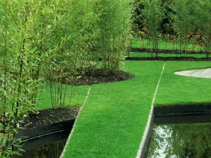 Black pool with arching bamboo